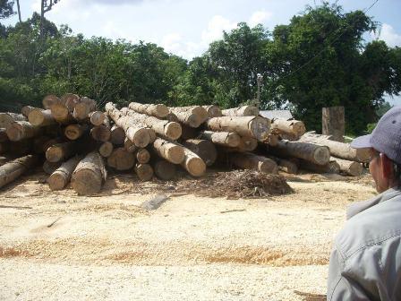 Kayu Log milik PT BMAL